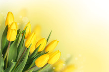 Spring Flowers. Beautiful Yellow Tulips Bouquet