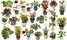 Houseplants And Indoor Flowers Set