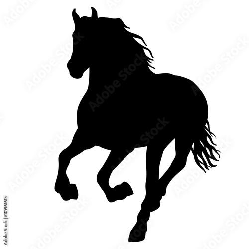 Fotografía  Black horse silhouette isolated