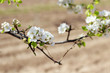 Flores del árbol