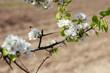 Flores del árbol con una abeja volando