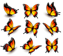 Beautiful Orange Butterfly In ...