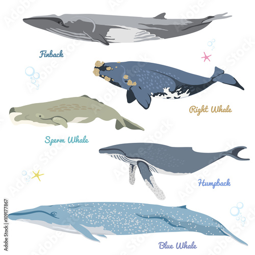 Fotografie, Tablou  Set of Whales from the world / Pygmy right whale, Bowhead Whale, Long-finned pilot Whale, Killer Whale, Pygmy Sperm Whale