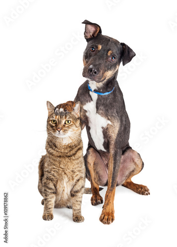 Dog With Paw on Head of Cat © adogslifephoto