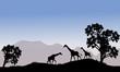 Giraffe in hills scenery