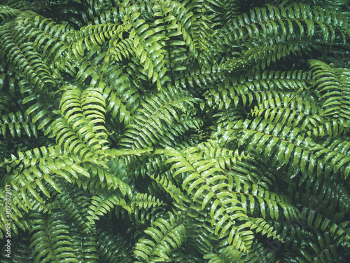 Ferns Leaves Forest Outdoor Nature abstract Background