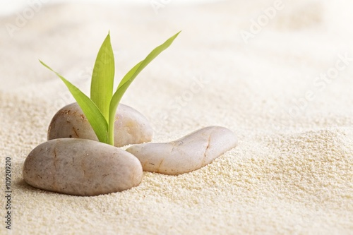 Foto op Aluminium Stenen in het Zand zen stones and bamboo on the sand