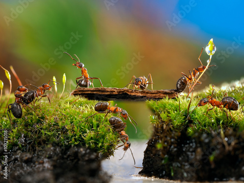 Fotografía  Many ants. Fairy picture for children. Moss, creek, bridge