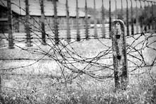 Old Worn Barbed Wire Fence On ...
