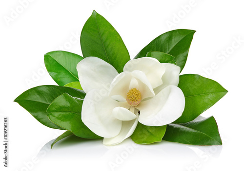 Photo sur Toile Magnolia White magnolia