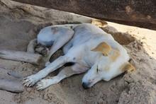 Hund Am Strand Von Bogmalo - G...