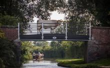 Cow On A Canal Tow Path Bridge...