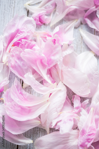 Garden Poster Pink peonies