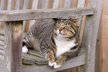 Farm Cat Enjoying The Sun And Waiting To Greet Visitors