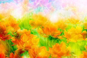 Fototapeta Tulipany Flowers tulips