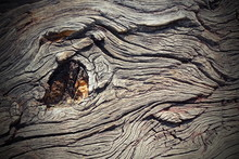 Knot On Real Oak Wood