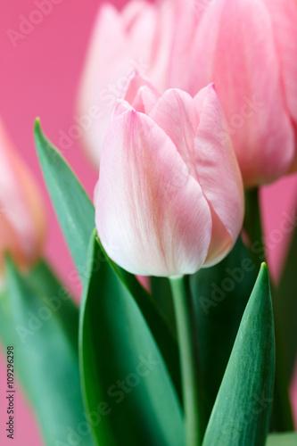 Garden Poster Lotus flower チューリップの花