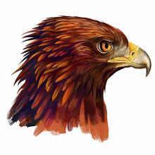 Eagle Head / Eagle Head Digit...