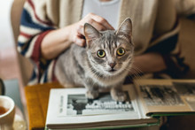 The Cat Sits On A Photo Album,...