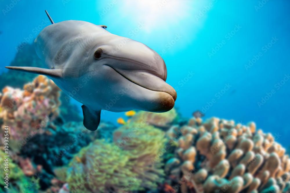 Fototapeta dolphin underwater on reef background