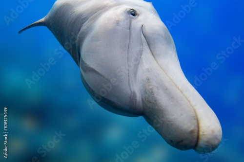 Spoed Foto op Canvas Dolfijn dolphin smiling eye close up portrait
