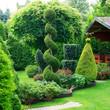 Shorn ornamental plants in a garden