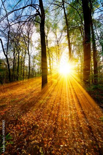 La pose en embrasure Jaune Sonnenaufgang im Wald
