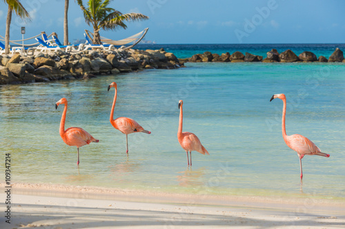 Foto op Aluminium Flamingo Four flamingos on the beach