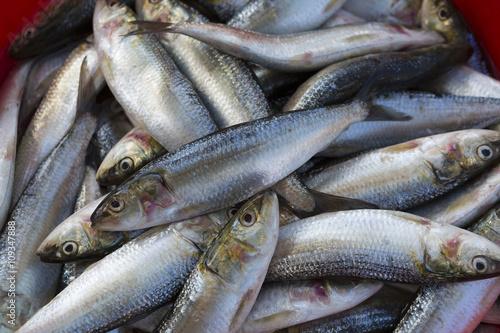 Photo  Fresh fish on sale at the Dubai Fish market
