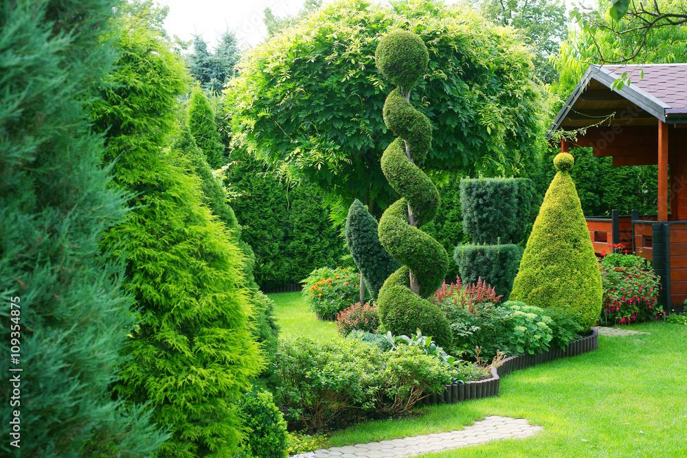 Fototapeta Shorn ornamental plants in a garden