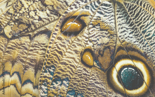 Butterfly wing Tablou Canvas
