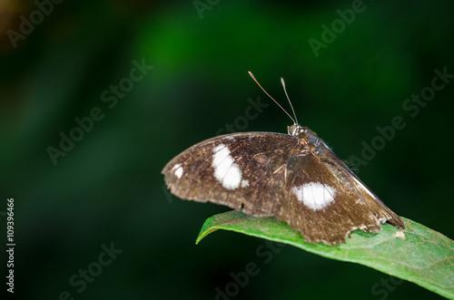 Butterfly Fototapet