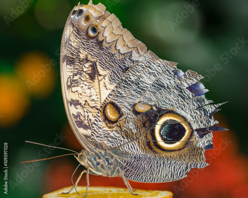 Close up butterfly design Tablou Canvas