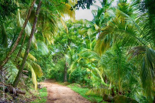zielona-tropikalna-dzungla