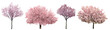Blossoming pink sacura trees isolated on white