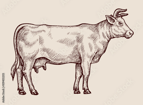 Sketch cow. Hand-drawn vector illustration Canvas