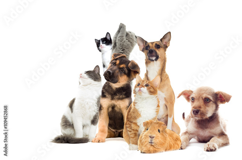 Poster Chien Pets looking