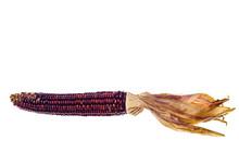 Painted Corn For Hallooween