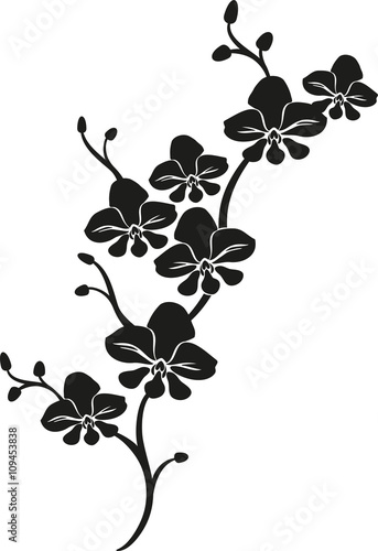 black cartoon vector orchid - 109453838
