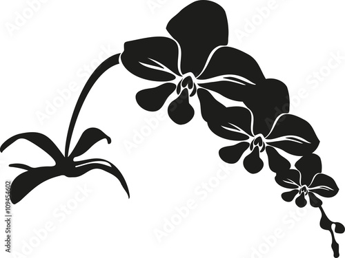 black cartoon vector orchid - 109454602