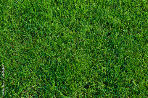 Bermuda grass background. Wallpaper Mural
