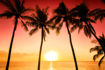 Fototapeta na wymiar Tropical island sunset with silhouette of palm trees, hot summer day vacation background