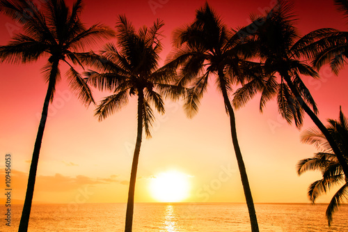 Tropical sunset over palm trees Fototapet
