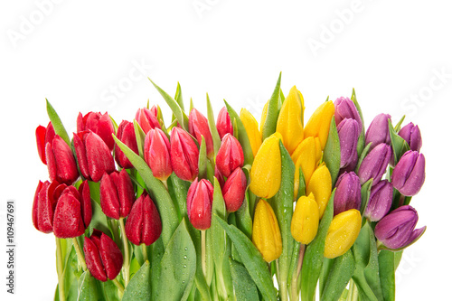 Poster Tulp Fresh spring tulip flowers isolated on white background
