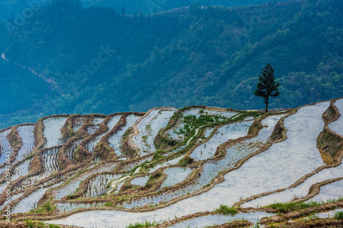Foto op Canvas Guilin Colorful rice terrace in spring, Guilin, China