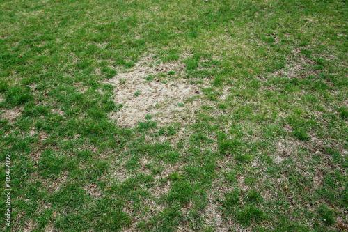 Fotografie, Obraz  Trávník ve špatném stavu a potřebují údržbu