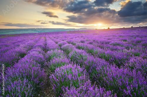 Fotobehang Snoeien Meadow of lavender.