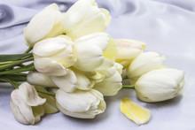 Soft White White Tulips