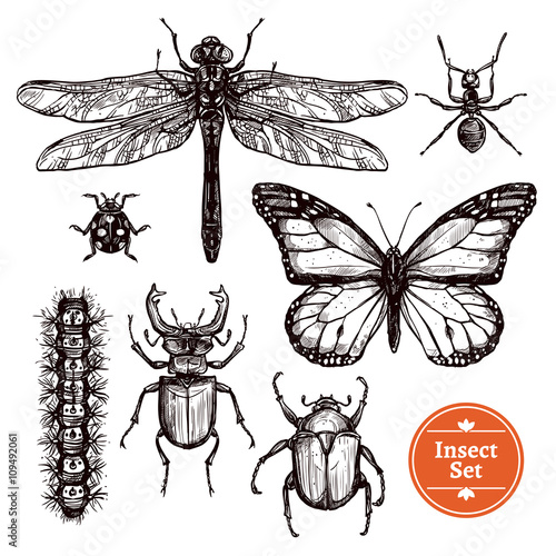 Fotografía  Hand Drawn Insect Set