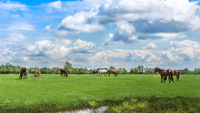 Green Pastures Of Horse Farms. Country Spring Landscape.